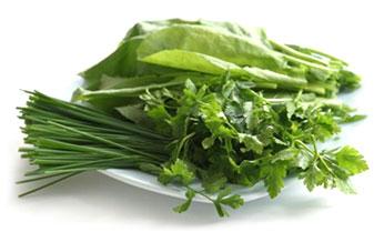 ハーブ治療(Herbal Medicine)